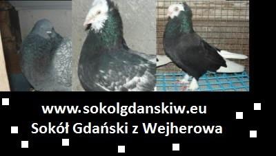 Sokół Gdański z Wejhereowa