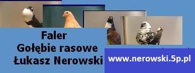 Gołębie Rasowe Łukasza Nerowskiego